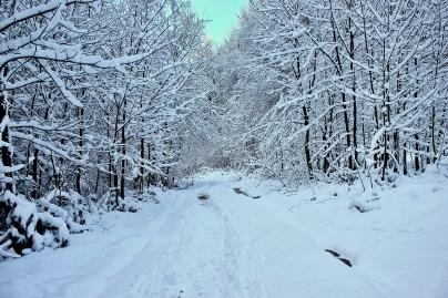 Schneespaziergang an Silvester im Schwarzwald